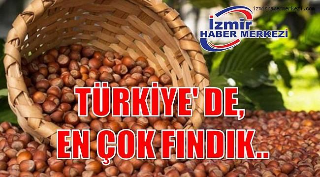 TÜRKİYE' DE EN ÇOK FINDIK..