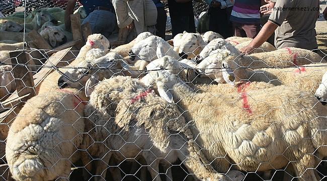 Bakan Pakdemirli satılmayan kurbanlıkları Et ve Süt Kurumunun alacağını bildirdi